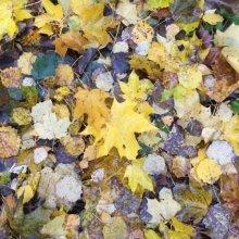 Muffler - Yellow Leaves (2020) [FLAC]